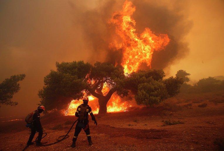 24 человека погибли в результате лесных пожаров в Греции