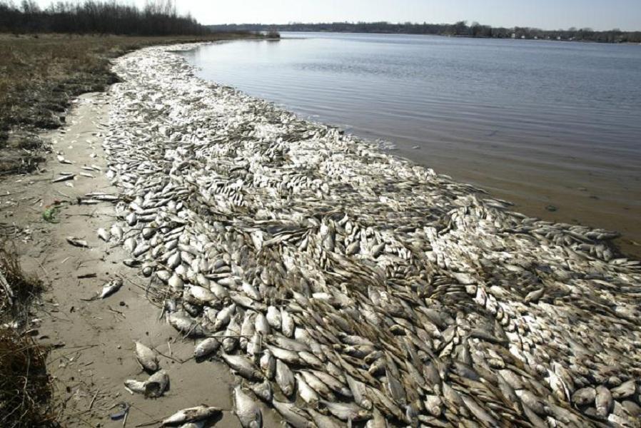 Участились случаи гибели рыбы, в водоемах Украины