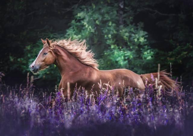 Полиция Франции расследует массовые, жестокие убийства лошадей