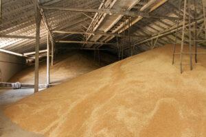 Директора филиала Госрезерва подозревают в растрате зерна на на сумму более 2,8 миллиона гривен
