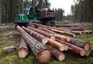 В Житомирской области два должностных лица были разоблачены за схемой по присвоению лесных ресурсов