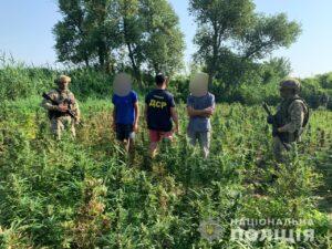 В Херсонской области правоохранителями была обнаружена плантация конопли: стоимость изъятого составляет более 10 млн гривен